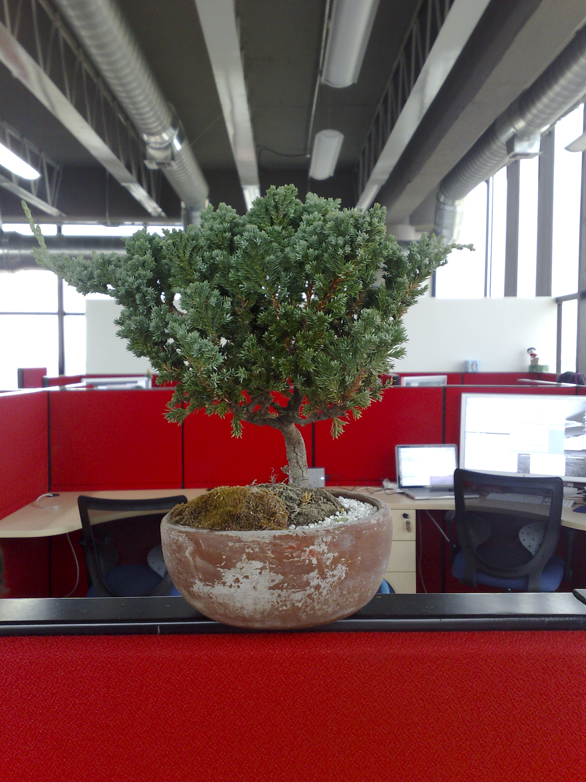 Boost employee productivity by adding live plants to your small office environment